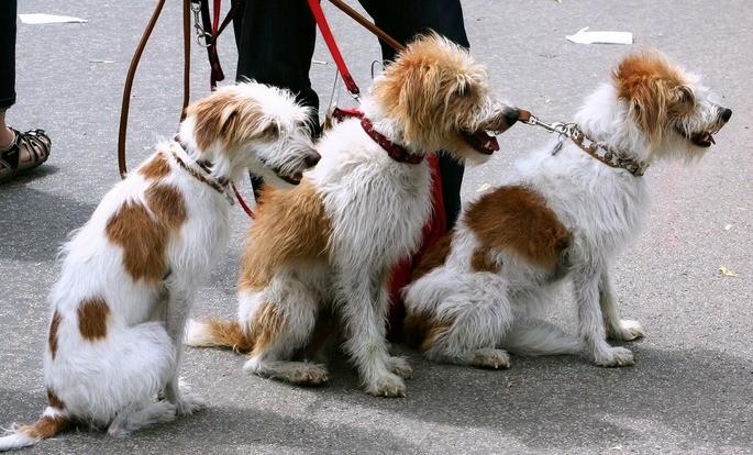 Pessoa em passeio com cachorros